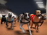 Гонки собак