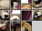 Пятнашки: смешные животные