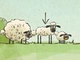 Домой, овца, домой