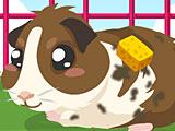 Уход за морской свинкой / Guinea Pig Care
