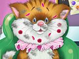 Кошка Анжела в больнице