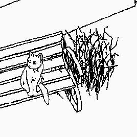 Скрытые Коты
