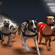 Игра Игра Гонки собак