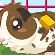 Игра Игра Уход за морской свинкой / Guinea Pig Care