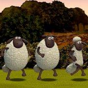 Игра Игра Барашек Шон: овцы чемпионы