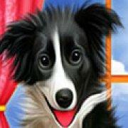 Игра Игра Уход за собакой