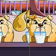 Игра Игра Отличия собак