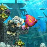 Игра Игра Акула ест рыбу